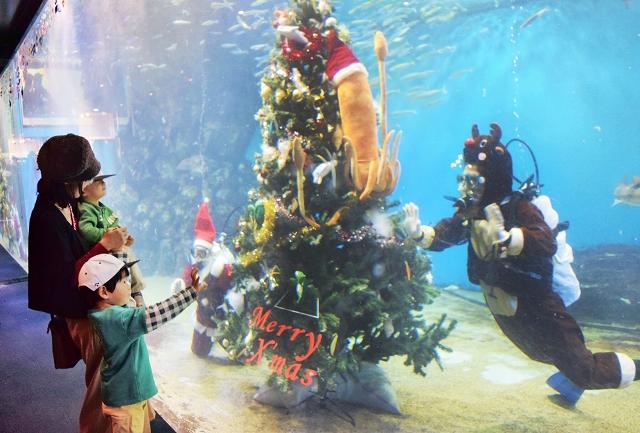水槽にお目見えした高さ約3メートルのクリスマスツリー=1日、福井県坂井市の越前松島水族館