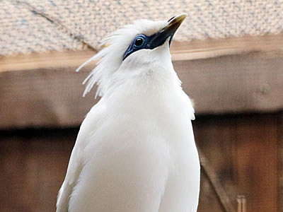 希少な鳥2種仲間入り 富山市ファミリーパーク