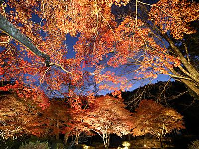紅葉ライトアップ 飯田の野底山森林公園