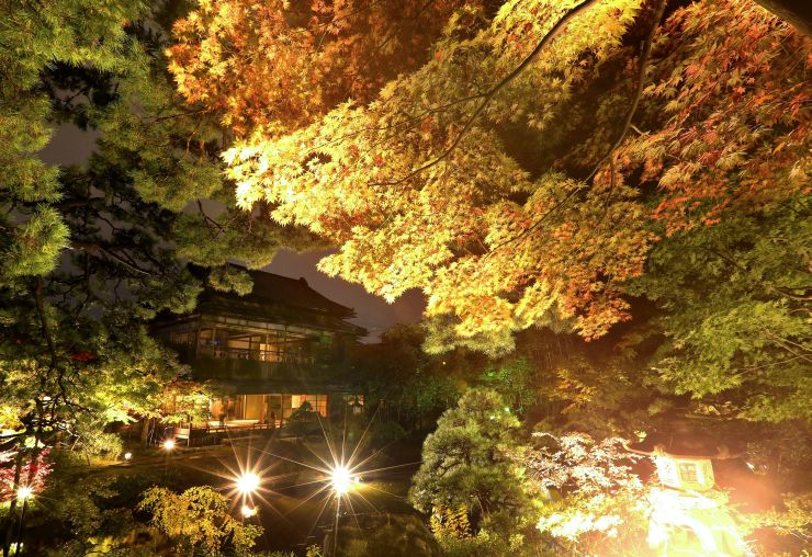 色づき始めた木々がライトに照らされた旧斎藤家別邸の庭園=4日、新潟市中央区西大畑町