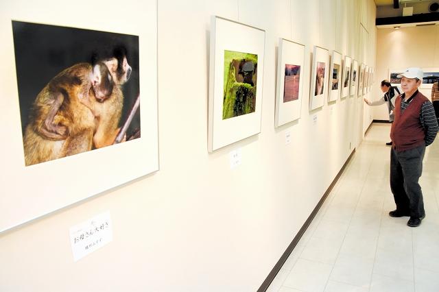 命をテーマにした写真などが並ぶ「フォトあかり」の作品展=4日、鯖江市まなべの館