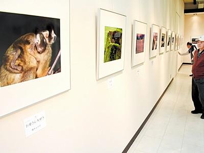写真愛好グループ、命テーマの作品展 鯖江