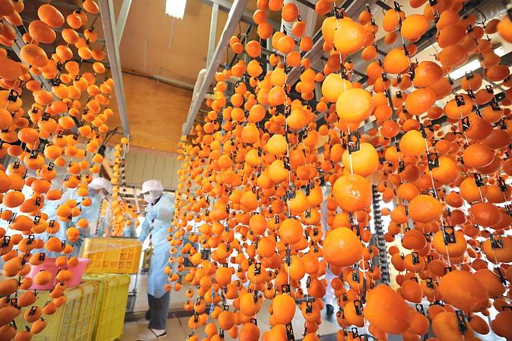 干し場につるされた色鮮やかな柿の実=6日、松川町上片桐