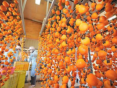 秋を彩る柿すだれ 松川町で「市田柿」作り本格化