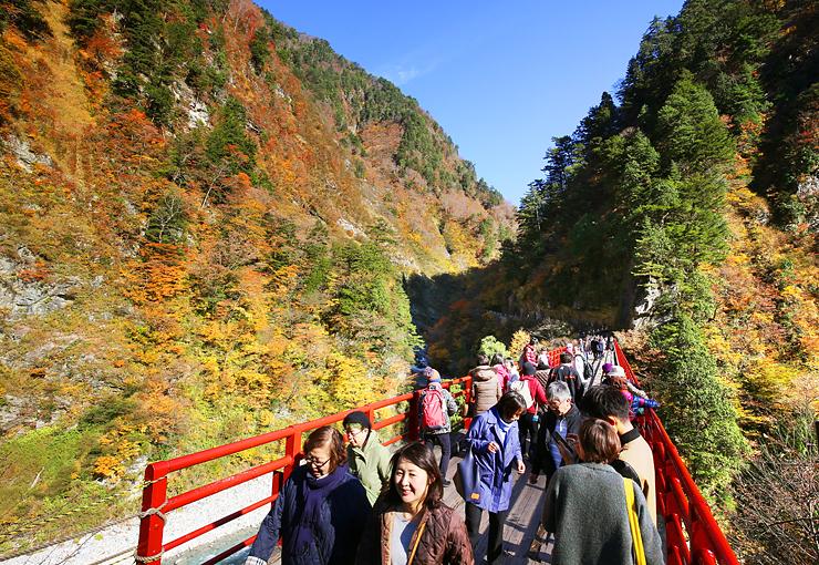 青空の下、黒部峡谷の紅葉を楽しむ観光客=欅平の奥鐘橋