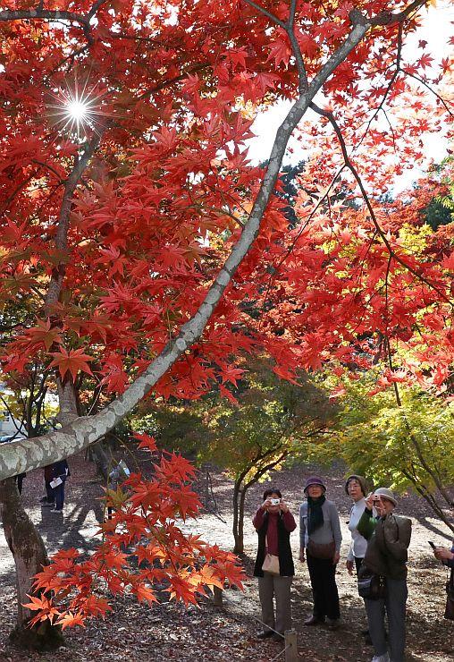 色とりどりのモミジを楽しむ来園者=7日、長岡市朝日の「もみじ園」