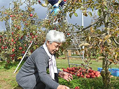 「秋の楽しみ」 安曇野でリンゴの木オーナーが収穫祭