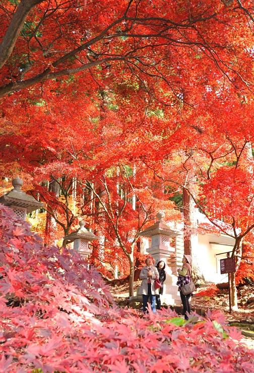 赤や黄色に色づき、参道を彩るモミジ=13日、長野市の清水寺