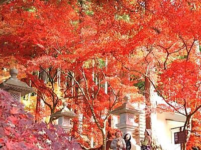 カエデ、燃えるよう 長野の清水寺で紅葉が見頃