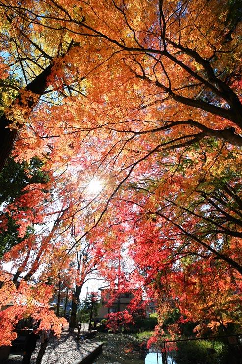 赤、黄、緑色のグラデーションが鮮やかな鳩ケ嶺八幡宮の紅葉