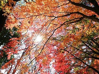 重なり合う赤・黄・緑 飯田・鳩ケ嶺八幡宮 夜はライトアップも