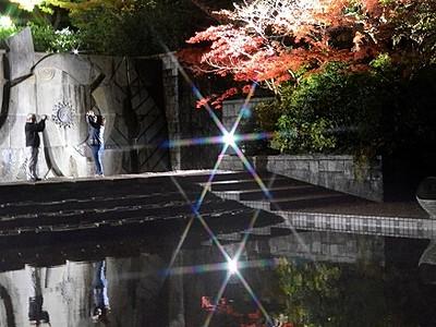 紅葉1000本、光に浮かぶ 福井県総合グリーンセンター
