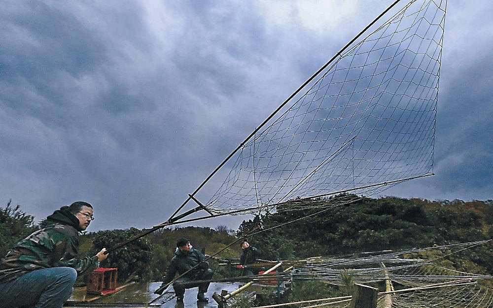 坂網を手にカモに狙いを定める猟師=15日午後5時5分、加賀市の片野鴨池周辺