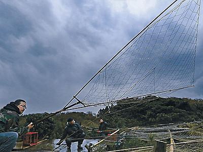 坂網手にカモ狙う 加賀・片野鴨池で伝統の猟