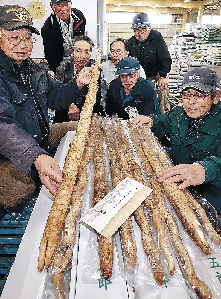 金沢藤五郎の出来栄えを確認する生産者=金沢市銚子町のJA金沢市東部集出荷場