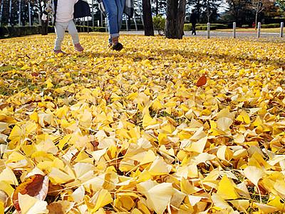 秋の終わり踏みしめて 富山・五福公園