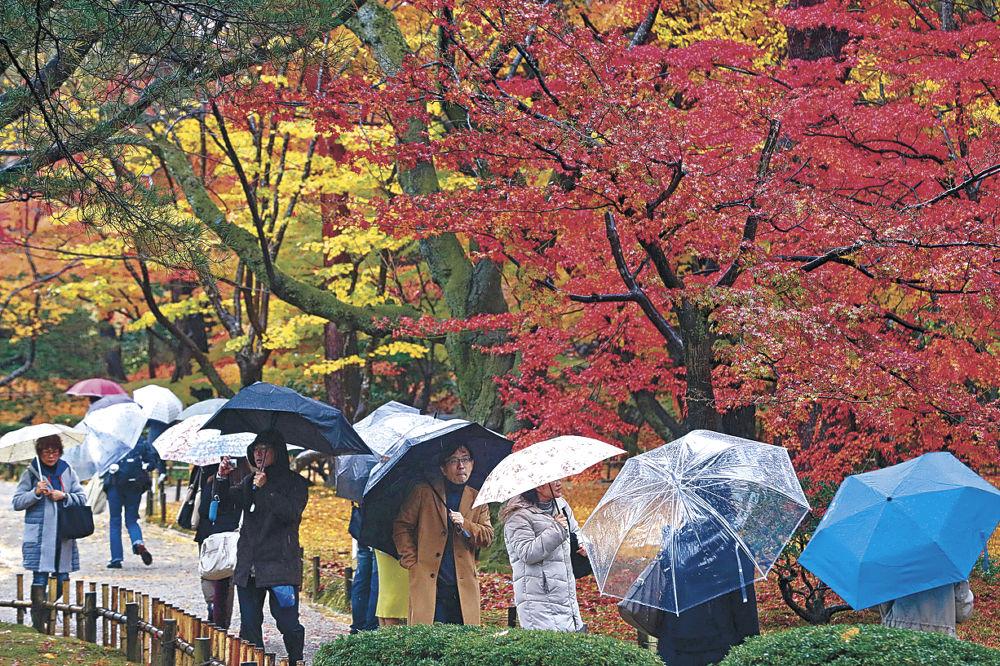 紅葉真っ盛りの園内を散策する観光客=兼六園