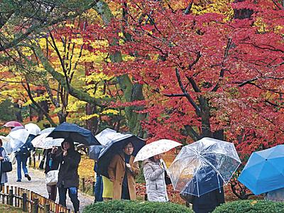 兼六園、紅葉最盛期 観光客ら、傘を手に散策