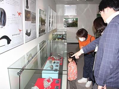 福井の恐竜化石も見もの 12月17日まで糸魚川で特別展