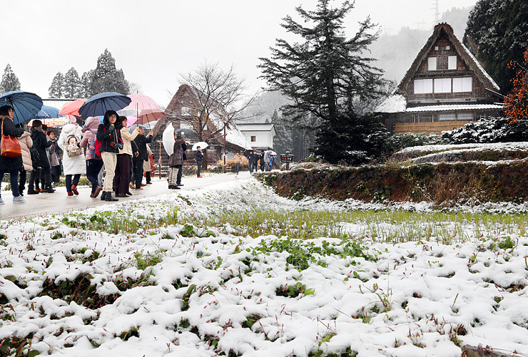 初雪で白く染まった合掌造り集落=19日午前9時50分ごろ、南砺市相倉