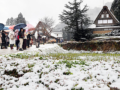 世界遺産・合掌集落が雪化粧 南砺・相倉