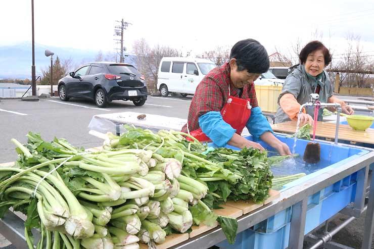 温泉のお湯を使って野沢菜を洗う利用者