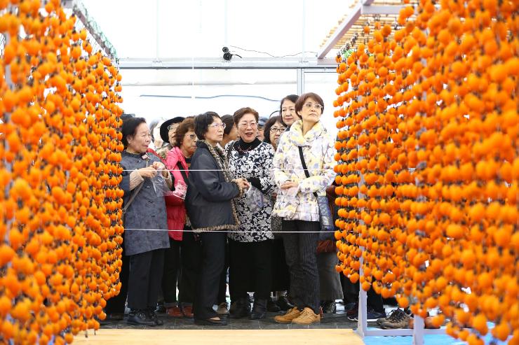 柿すだれを見学する大勢の観光客=22日、豊丘村