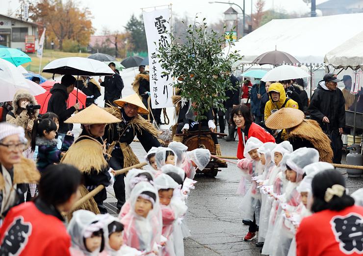 降雪を願い、スギの木を引っ張る住民や園児ら=イオックス・アローザスキー場
