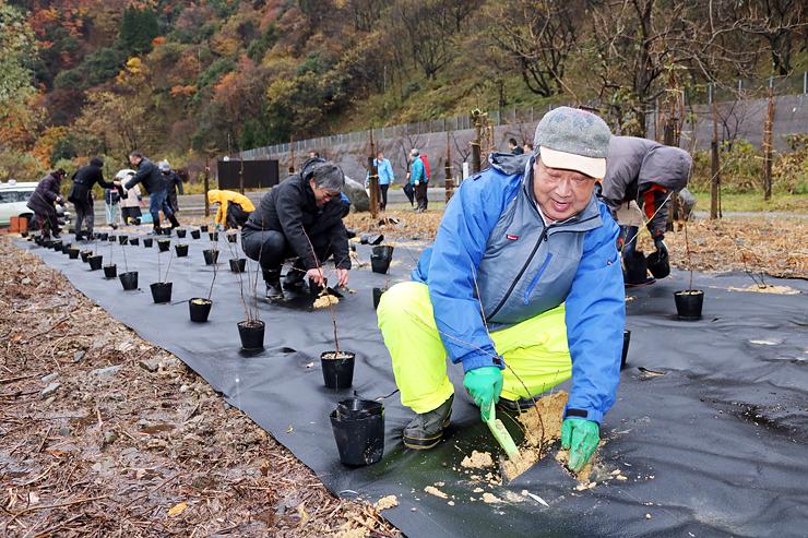 三色桃の苗木を植える参加者=黒部市宇奈月町音沢