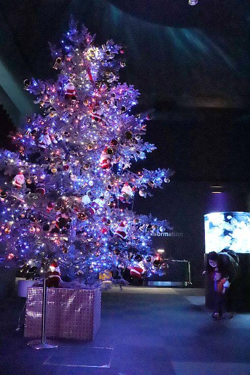 クラゲ水槽を幻想的に照らすクリスマスツリー=新潟市中央区