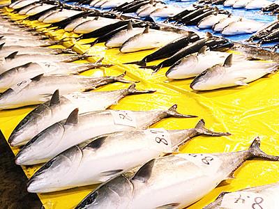 「ひみ寒ぶり」漁の開始宣言 540本水揚げ