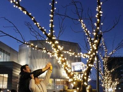 """冬の玄関口""""桜""""華やか LED点灯始まる 上越妙高駅"""