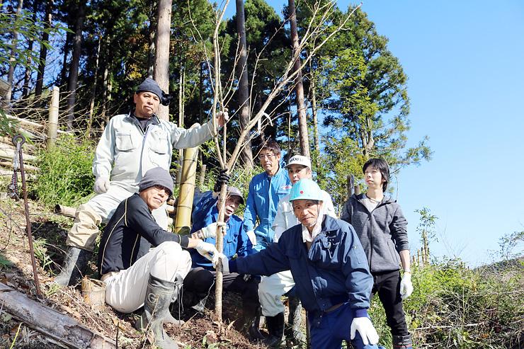 竹林を伐採した跡地に山桜を植える氷見市の指崎森林振興会員