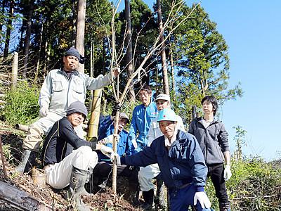 山桜の名所つくろう 氷見、竹林伐採跡に植樹