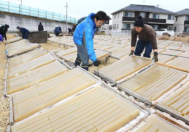 寒空の下、生寒天を干し場に並べる寒天メーカーの従業員=4日、茅野市宮川