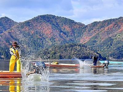 コイなど狙い三方湖で「たたき網漁」 刺し身や煮付け美味