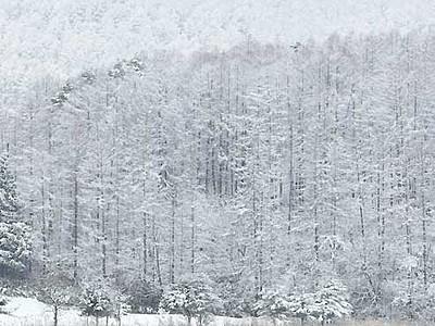 雪化粧、静寂に包まれ 飯綱町の霊仙寺湖畔
