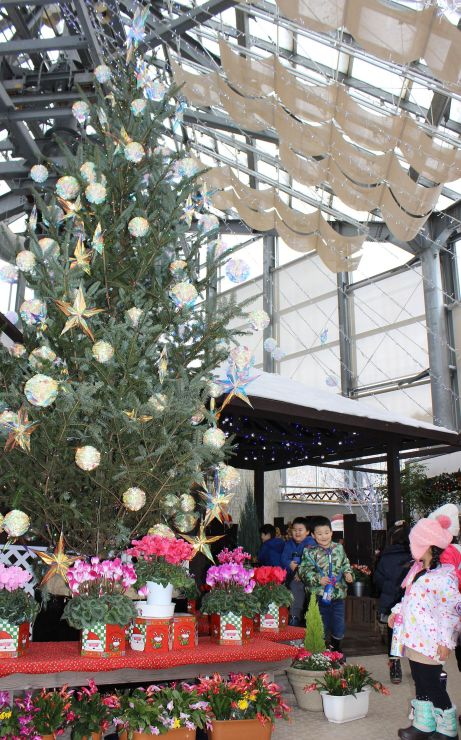 大型クリスマスツリーが出迎えてくれるクリスマス展=12日、新潟市秋葉区の県立植物園