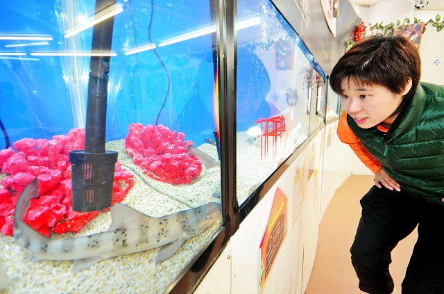 来年の干支にちなんだ水中生物の展示=14日、福井県坂井市の越前松島水族館
