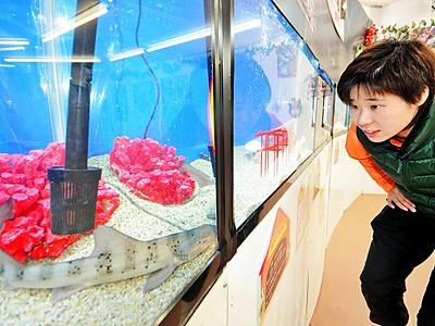 水中の「イヌ」見比べて 坂井市越前松島水族館で展示