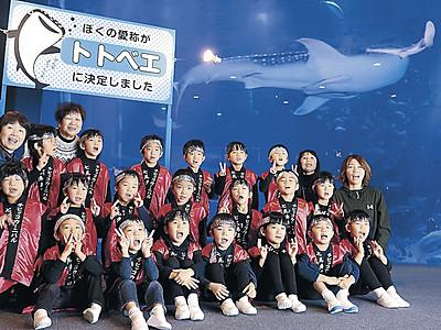 ジンベエザメ愛称は「トトベエ」 のとじま水族館で命名式