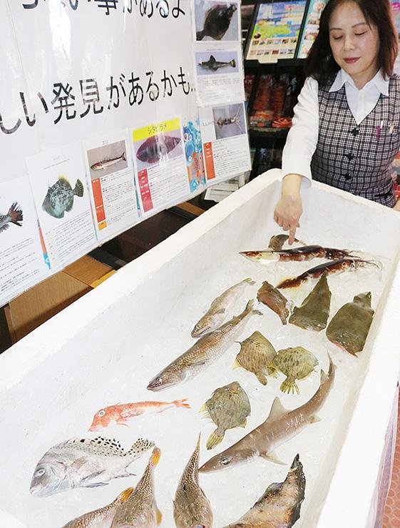 会場に展示された地元産の魚介類