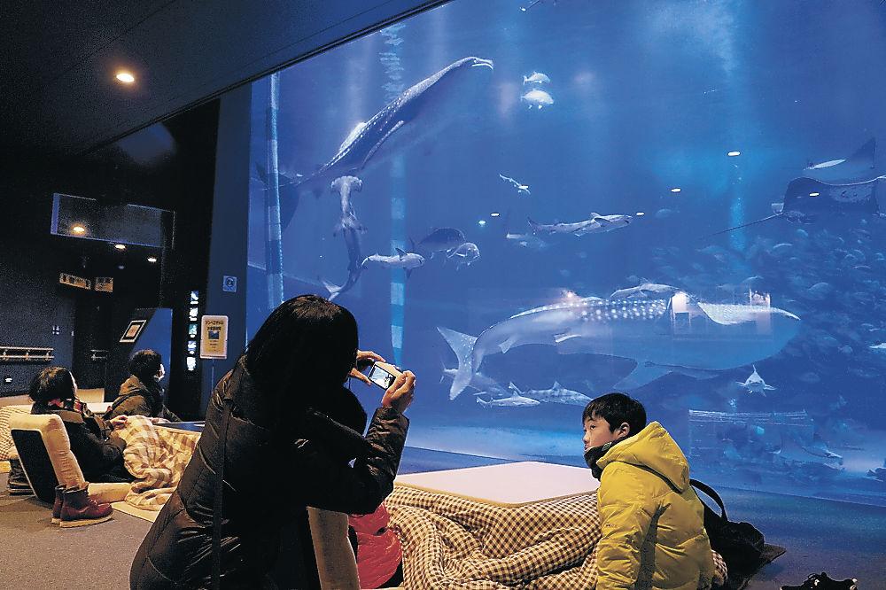 こたつからジンベエザメを眺める来館者=七尾市ののとじま水族館