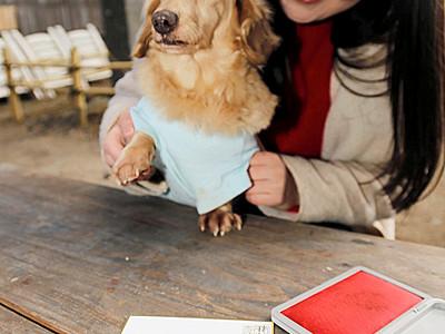 肉球スタンプで愛犬の健康祈願 軽井沢、熊野皇大神社
