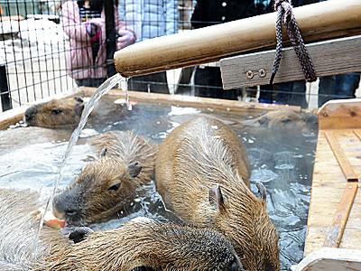 動物と楽しい正月 須坂市動物園が催し