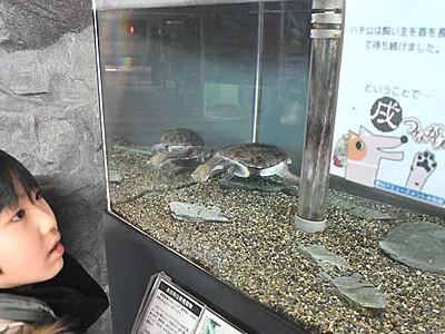 水の生き物と犬、意外な関係 茅野の水族館で紹介
