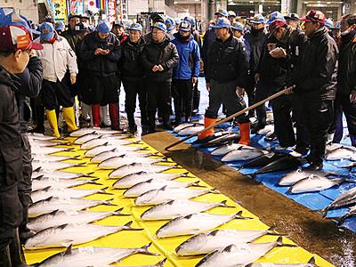 ひみ寒ぶり385本 氷見魚市場初市