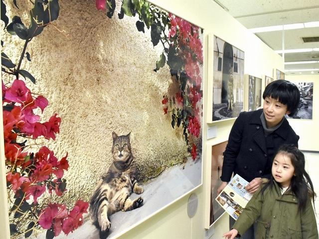 さまざまな表情、しぐさのネコの写真が並ぶ作品展=福井市の西武福井店