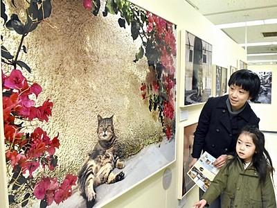 頬が緩むネコの写真 岩合光昭さん作品展、西武福井店