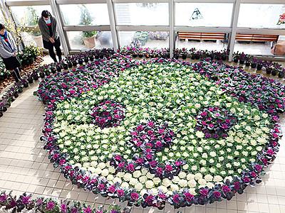 ハボタンで「戌」表現 砺波・県花総合センター季節展示